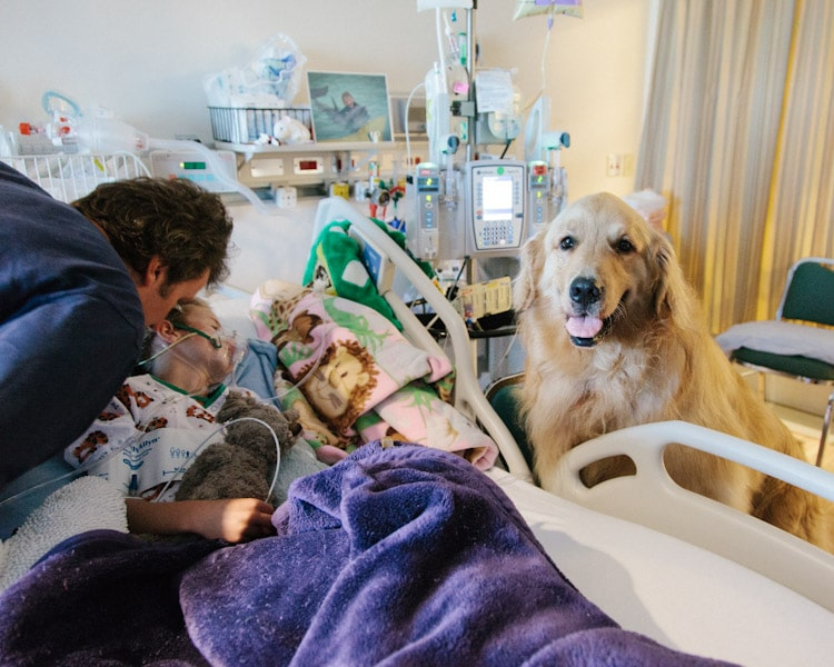 120714_005_dog_therapy
